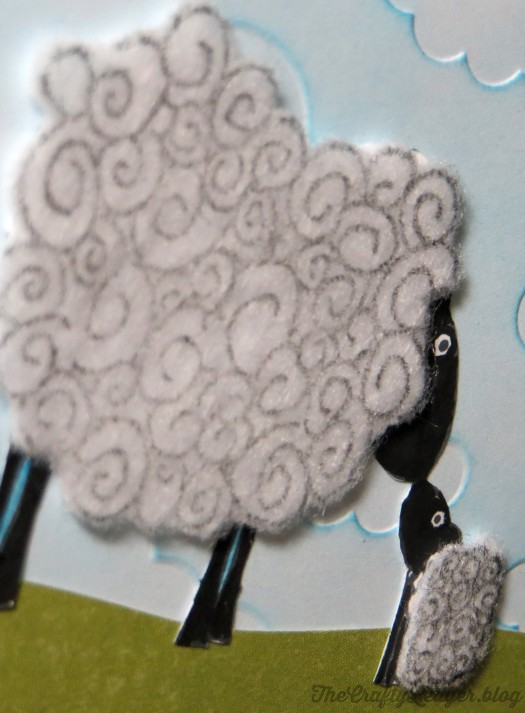 Texture_sheep_closeup